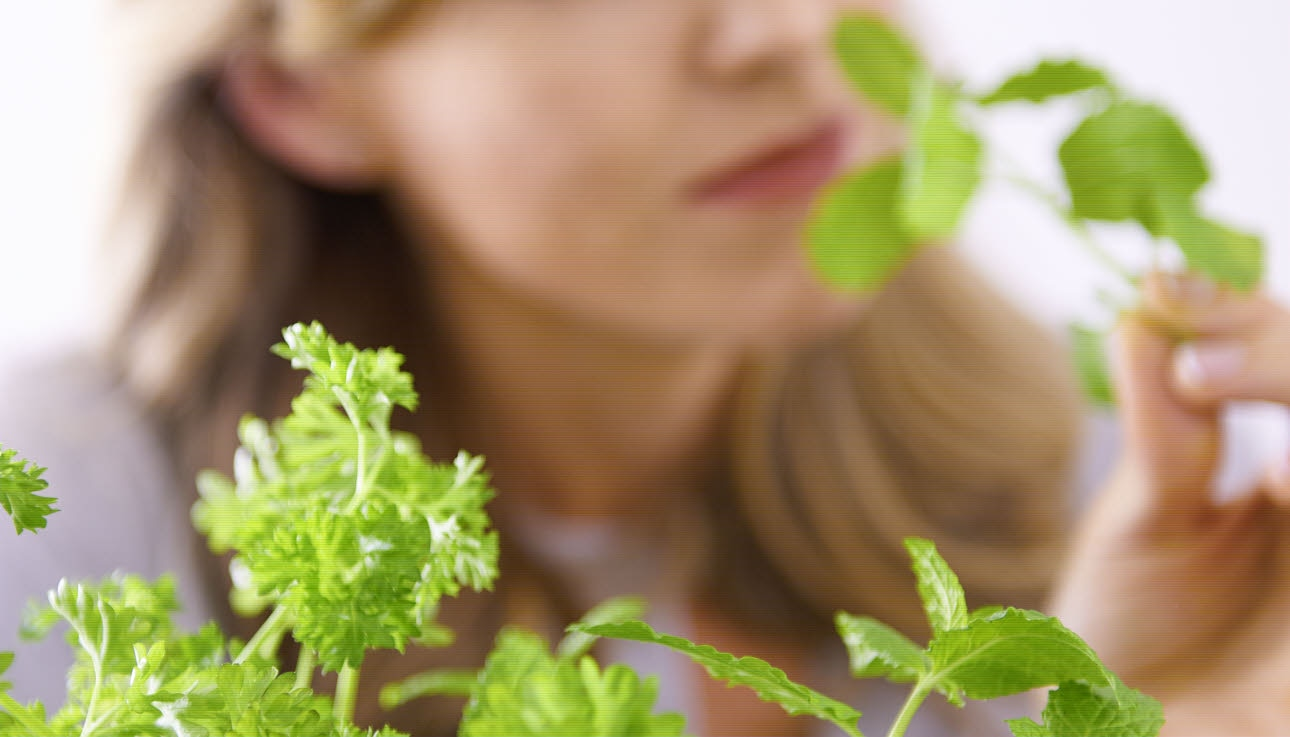 Female smelling herbs